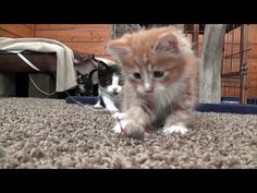 Catch That Mouse Toy Kittens!