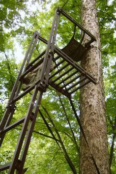 Our 100% folding 15' tall ladder stand is packed with all of the features you want (like an adjustable platform and padded sling seat), the quality you expect (made in the USA from aircraft quality aluminum with double rail construction), and the TimberTall Lifetime Warranty to back it all up! This revolutionary ladder stand is lightweight and versatile (it can be set up and taken down in seconds by ONE PERSON - and that's for real!) #Hunting #Treestand #Whitetail Tall Ladder, Ladder Stands, Climbing Tree Stands, Deer Hunting, Hunting Stuff, Invention And Innovation, Hunting Blinds, Pink Camo, Platform