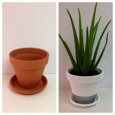 Boring Terracota pot transformed with $1 paint and $3 aloe Vera plant from Home Depot!
