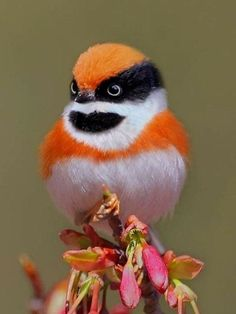Take a break and go through these 26 cute animals boost your mental focus. These cute animals pictures are so heart touching and feel relaxed everyone. Cute Birds, Pretty Birds, Beautiful Birds, Animals Beautiful, Cute Animals, Beautiful Pictures, Exotic Birds, Colorful Birds, Funny Bird