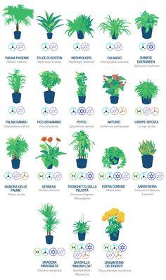 Piante ed alberi producono anidride carbonica (CO2) convertendola in ossigeno, essenziale per la nostra vita [Leggi Tutto...]