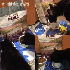 If you are concerned that you don't have a healthy, happy pet then you will want to check out @Canidae's pet food for your furry friends!   #ad #HealthyPetHappyPet