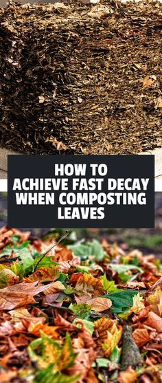Leaves contain 80% of the nutrients and minerals in a tree...so let's get them in your soil! Learn how to compost leaves so they break down quickly.