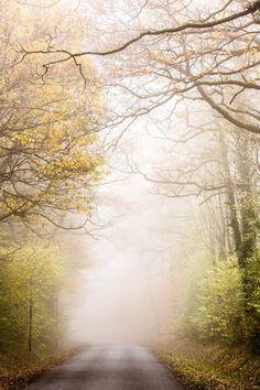 mistymorningme: Bosque misterioso por Éole