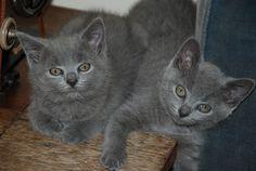 Mouchette and Minouche Babies
