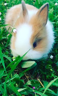 26 Bunnies So Ridiculously Cute It's Overwhelming