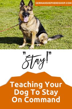 Useful Dog Obedience Training Tips – Dog Training Training Your Puppy, Dog Training Tips, Training Schedule, Training Videos, Mites On Dogs, Dog Minding, Easiest Dogs To Train, Dog Training Techniques, Dog Barking