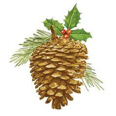 pinecone_w2007.jpg (240×240)