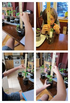 Plant Science Project
