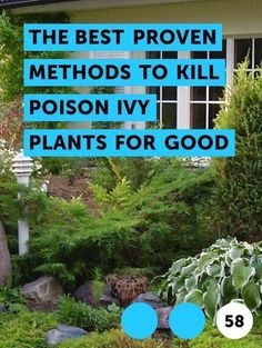 Uncategorized – WordPress - Modern Design Vegetable Garden Planning, Backyard Vegetable Gardens, Vegetable Garden Design, Poison Ivy Vine, Kill Poison Ivy, Texas Gardening, Gardening Tips, Organic Gardening, Flower Gardening