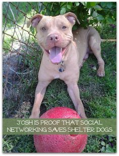 Social Networking Saved Josh - The Lazy Pit Bull http://www.thelazypitbull.com/2013/06/social-networking-saved-josh/