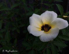 Close To You | #flowers #bungapukulsembilan #bungapagihari