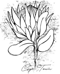 Illustration of of a King Protea town Scrapbook Albums, Scrapbooking, Protea Art, King Protea, Flower Drawings, Header Image, Cape Town, Line Drawing, Art Tutorials