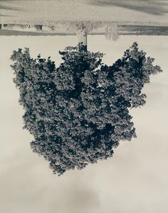 Rodney Graham (b. 1949), Oak, Middle Aston, 1990, from the portfolio Oxfordshire Oaks, Fall 1990, 1990. Chromogenic print, 90 5/16 × 71 3/8 ...