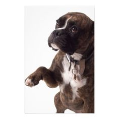 #boxer dog stationery - #boxer #puppy #boxers #dog #dogs #pet #pets #cute