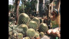 Defekt, sör és kaktuszok //Krakkó vlog1 - YouTube