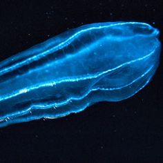 Zooplankton Pooing Microplastics to Ocean Floor : Discovery News