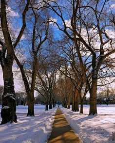 winter, Colorado State University Oval