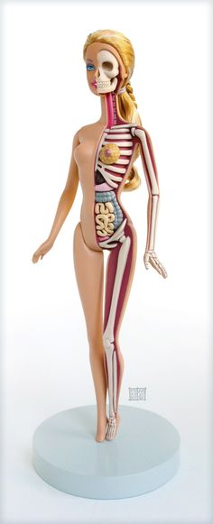 Hot on the heels of LEGO anatomy guy comes artist Jason Freeny's latest work: a hand-sculptured anatomical model of Barbie.