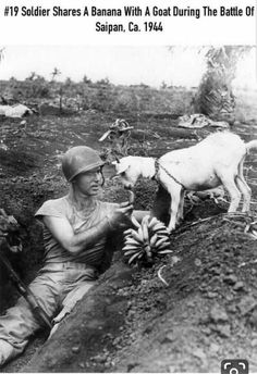 Marine First Sergeant Neil I. Shober of Fort Wayne Ind. shares the spoils of war-bananas-with a native goat one of the few survivors of the terrific naval and air bombardment in support of the Marines hitting the beach on the island of Saipan. Unbelievable Pictures, Cool Pictures, Animal Pictures, Salvador Dali, Battle Of Saipan, Rare Historical Photos, Weimaraner, See Photo, Old Photos