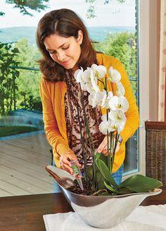Wellnesskur für Orchideen
