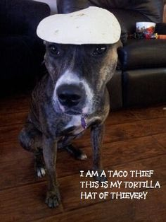 """""""I am a taco thief. This is my tortilla hat of thievery"""""""
