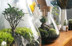 LA méthode pour créer soi-même ses terrariums