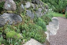 sten i rabatt Kuvahaun tulos haulle kivikkopuutarha Alpine Garden, Alpine Plants, Perennial Grasses, Perennials, Different Plants, Plant Species, Backyard, Patio, Dream Garden