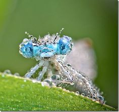Crystal Insects - Amazing beautiful close up insects photos