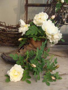 valkoinen juhannusruusu-white Midsummer Rose