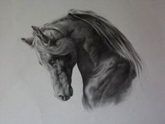 Andalusian Horse charcoal sketch