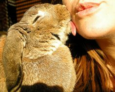 bunny kisses (@Anna Jorgensen, somehow i feel you will appreciate this picture)