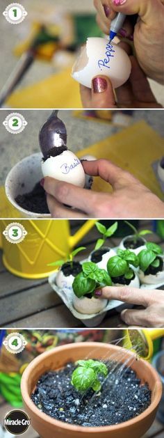 This is a fun way to start your vegetable or flowers seeds indoors to get a jump on the growing season. 1 – Crack the eggs toward the pointy end to remove 1/3 of the shell. 2 – Rinse th…