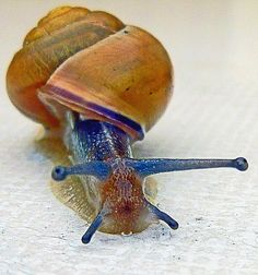 Snail on a White Table  Peter Koeck