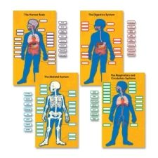"Bulletin board set helps students learn about the parts of the body and the systems of the body. Use the 80 color-coded, detachable labels to identify the major organs, the digestive system, the skeletal system, and the respiratory and circulatory system. This 84-piece set also includes four body system charts (13-3/4"" x 24"") and a teacher resource guide. Human Body Bulletin Board Set is designed for students in second through fifth-grade and ages 7 to 10"