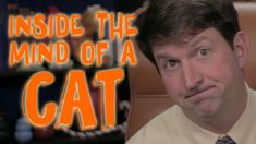Dr. Andy Roark goes inside the mind of a cat in this episode of Cone of Shame.