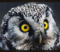 Serious business #owl