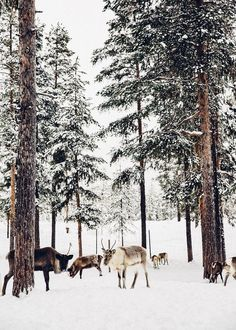 Winter in Swedish Lapland. Last winter we headed to the far North, for an adventure along glistening ice covered roads, through snow covered forests and past