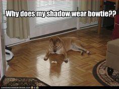 Why does my shadow wear bowtie??