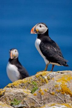 We took a cruise to Alaska in May and I was looking for the Puffins!  Sorry to say we did not see any.