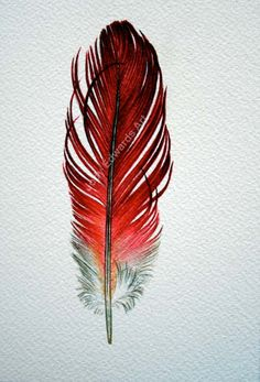 Feather Drawing, Feather Tattoo Design, Watercolor Feather, Feather Painting, Feather Art, Feather Tattoos, Watercolor Paintings, Tattoo Indio, Tattoo Plume