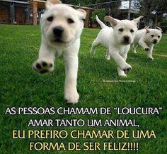 MTO FELIZ!!! <3 <3 <3 #filhode4patas #maedepet #maedecachorro #paidecachorro #cachorro #petmeupet
