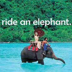 I rode an elephant in Chiang Mai, Thailand!