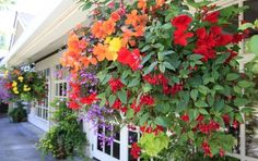 Flowers in hanging basket with ivy in planters Brown Stock Image, Hanging Flower Baskets, Brown Walls, Property Search, Landscaping Tips, Container Gardening, Landscape Design, Environment, Bloom