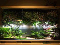 Палюдариум – домашний Эдем<br><br>Изобретательность человека не знает границ. Так, изобретательность Натаниэла Уорда, жившего в Лондоне в 19 веке, внесла ощутимый вклад в развитие способов комнатного цветоводства. Он накрыл свою коллекцию тропических растений стеклянным ящиком, защищая их от загр..