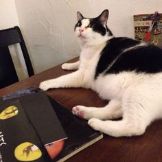 Poe at a cat cafe 'catteria cloud nine'