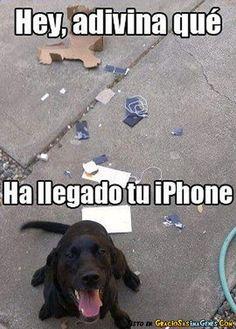memes en español - Buscar con Google #failsespañol Funny Animal Pictures, Dog Pictures, Funny Animals, Cute Animals, Funniest Pictures, I Love Dogs, Cute Dogs, Tierischer Humor, Cats Humor