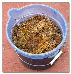 moss soaking in water