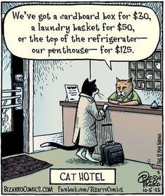 Hotel Catlifornia
