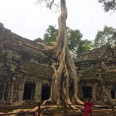 Angkor (Ta prom), Cambodia, by Mazatravel